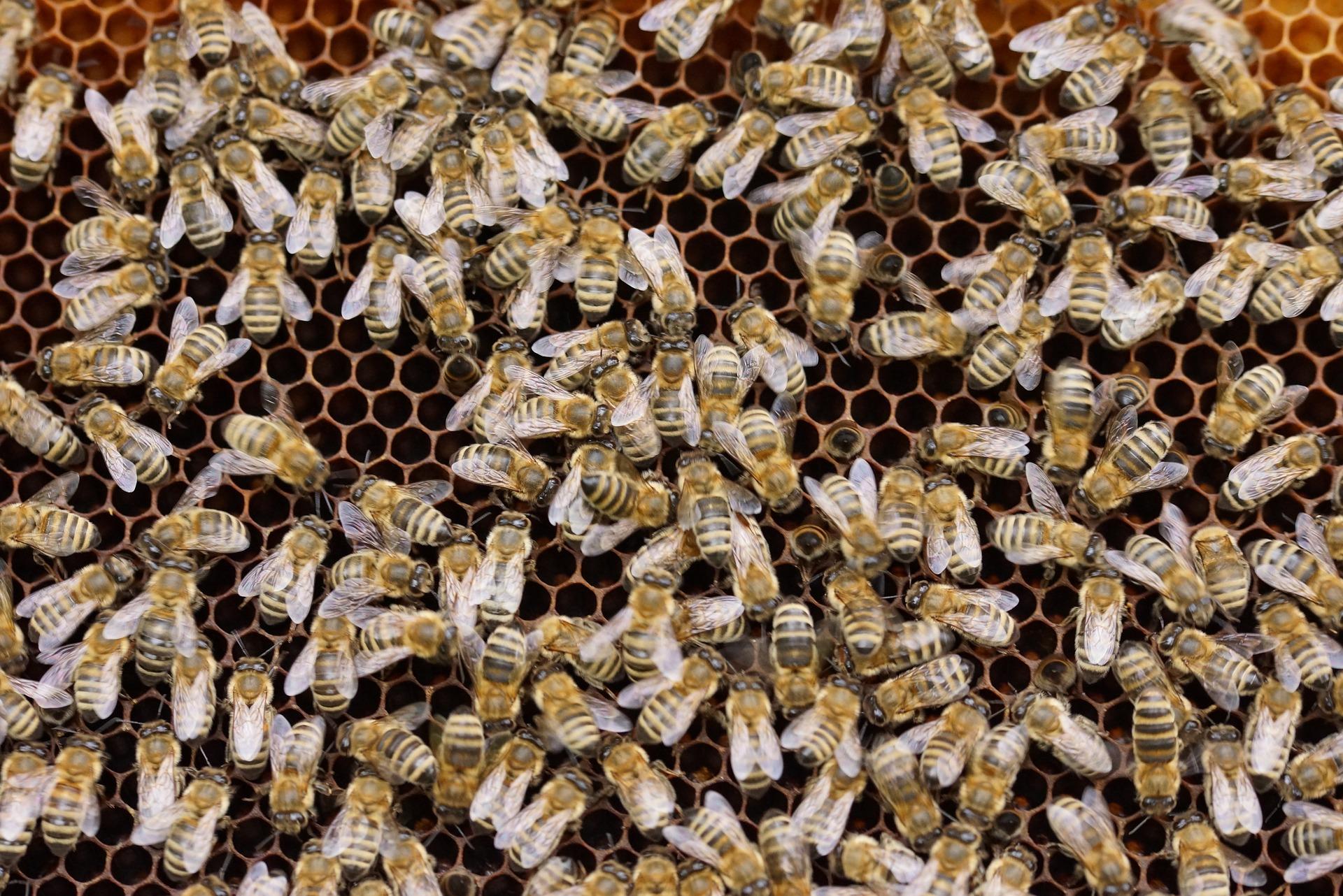 l'apiès et notre vision de l'accompagnement à la création d'entreprise